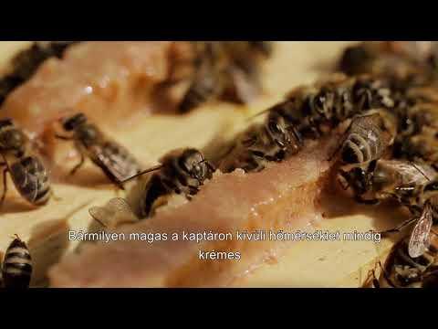 paraziták kezelése és etetése)