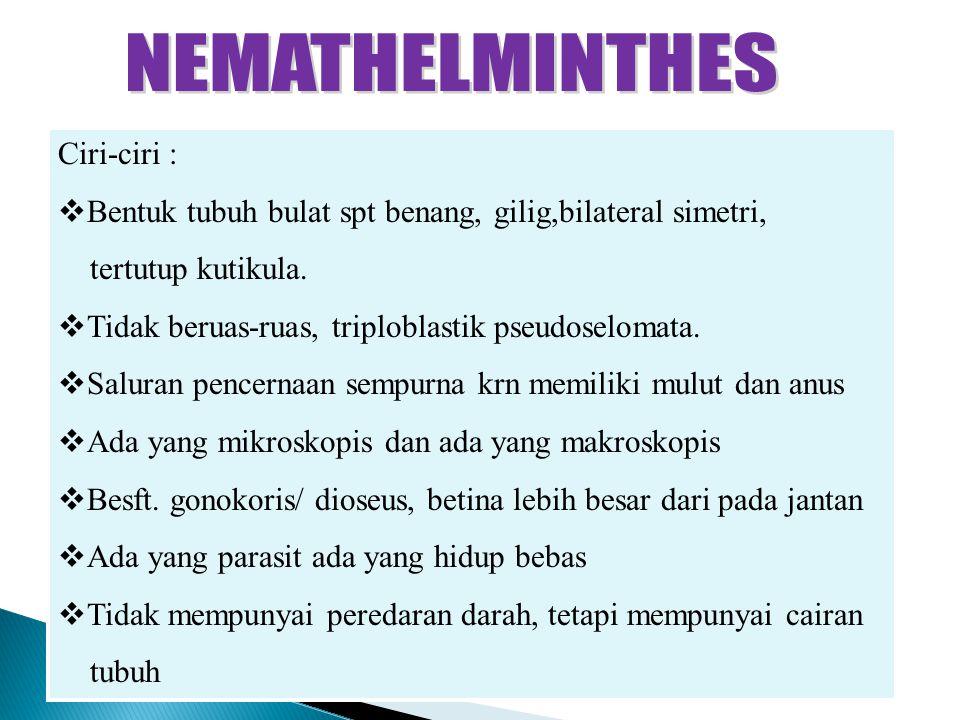 Filum nemathelminthes ppt - podkedd.hu