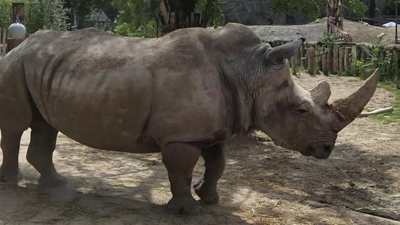 állatkert orvos féreg tabletták vélemények