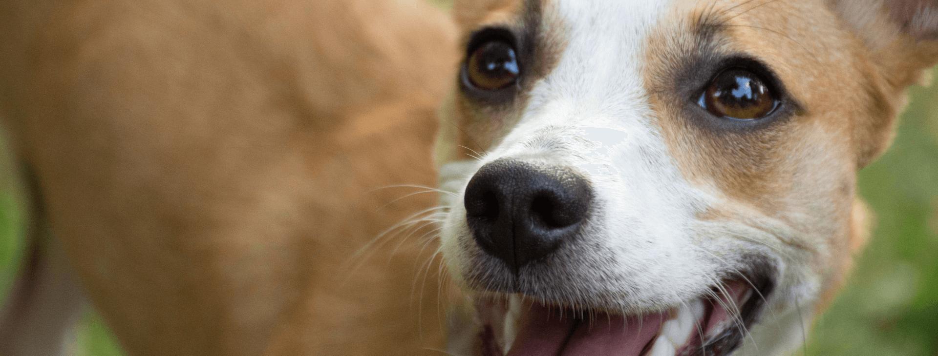 Parazitaellenes gyógyszerek az állatgyógyászatban