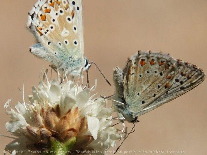 papilloma kezelése burgonyával