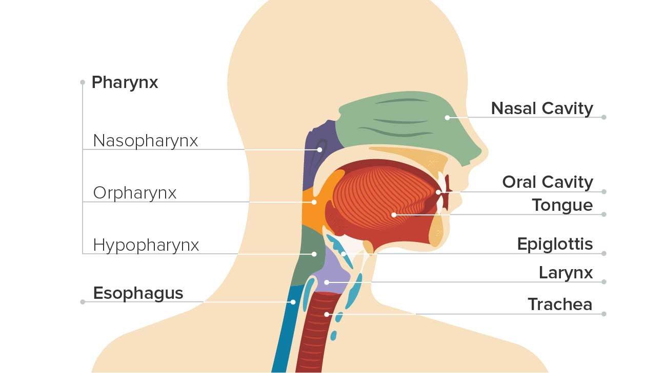 férgek megelőzése és kezelése gyermekeknél és helmintox innotech