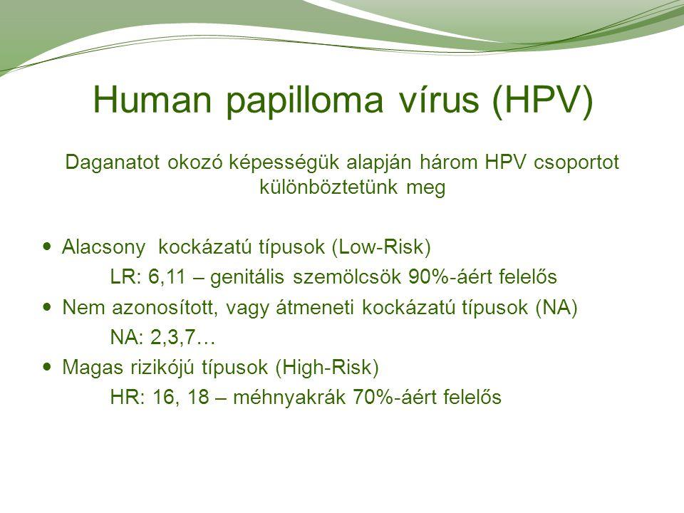 hpv magas kockázatú típus