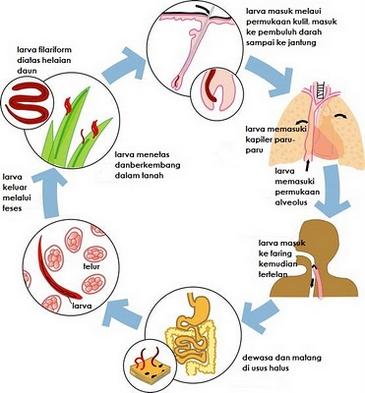 mennyibe kerül a féreggyógyszer szemölcsök nélküli emberi papillomavírus-fertőzés