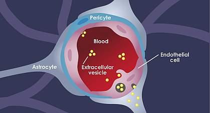 hormonális rák mi