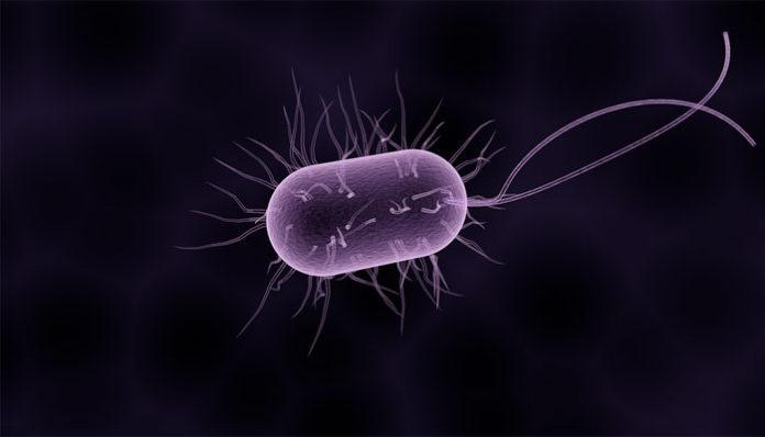 parazita jetra talpi fekete okai