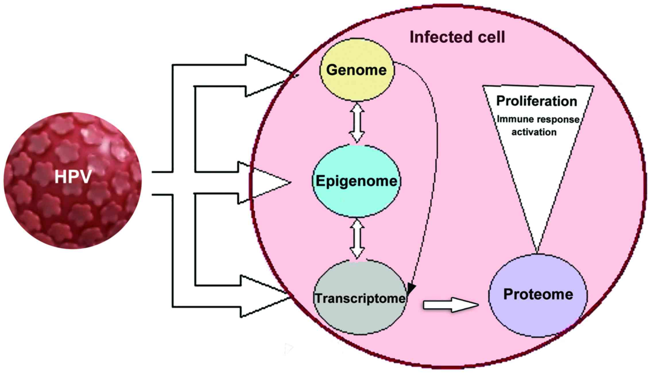 papillomavírus, mint kezelni