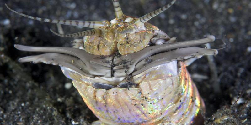 tengeri fonálféreg)