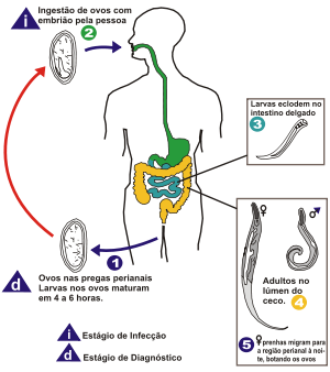 Giardia sintomas transmissao e prévencao, Giardias gyógyszere