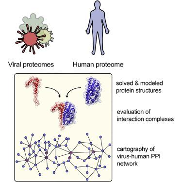 HPV-szemölcs az ínyen?
