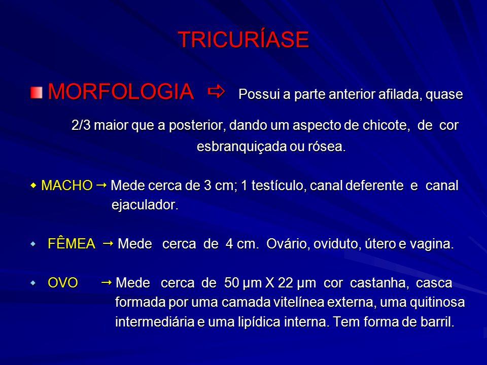 Ascaris tojás morfológiája