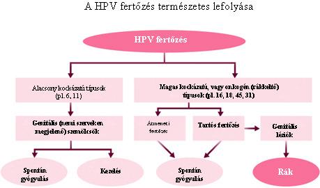 hpv rosszindulatú átalakulás)