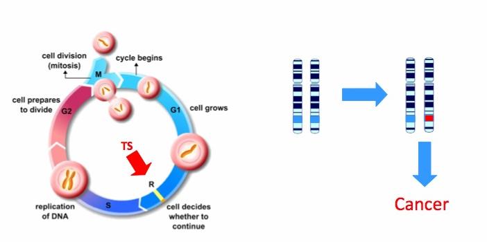 családi rák és gének)