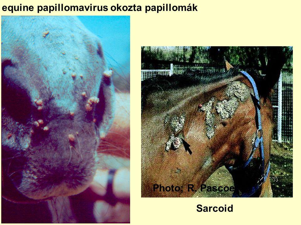 szarvasmarha papillomatosis típusai