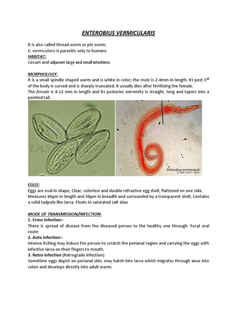 vermigális pinworm kezelés a leghatékonyabb helminták
