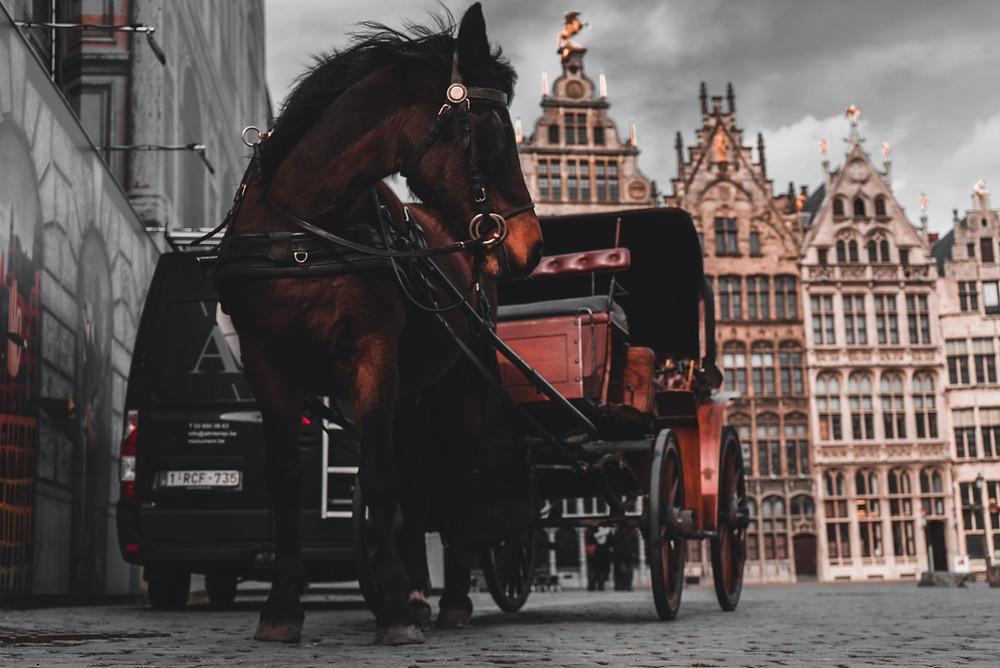 Betegség előtti állapot lovaknál