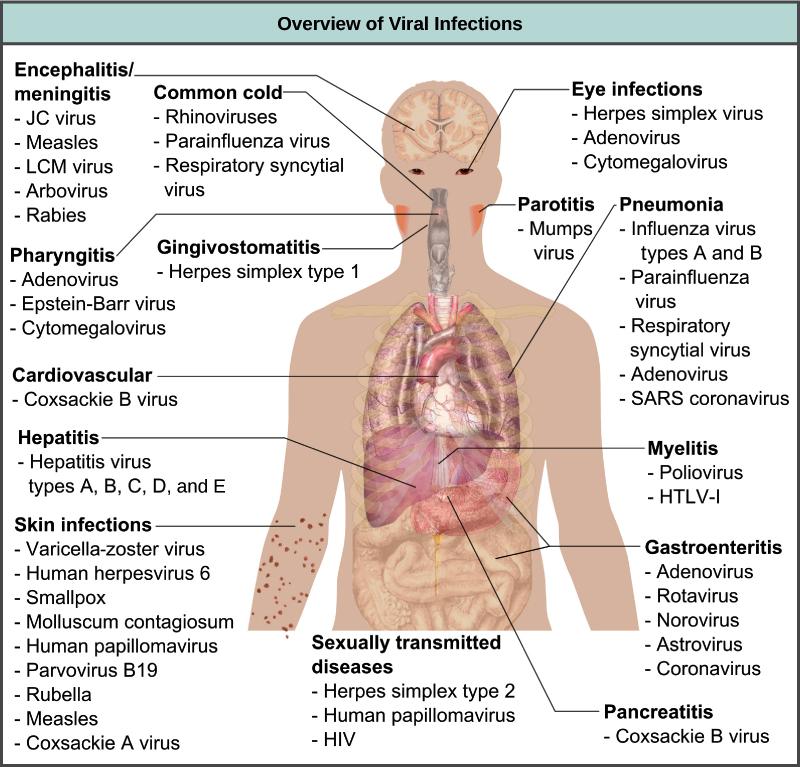 humán papillomavírus retrovírus)