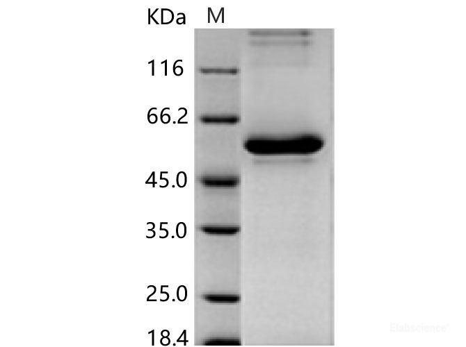 papilloma vírus hpv 45)