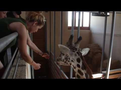 állatkert orvos féreg tabletták vélemények)