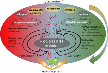 Segítő baktériumaink pótlása
