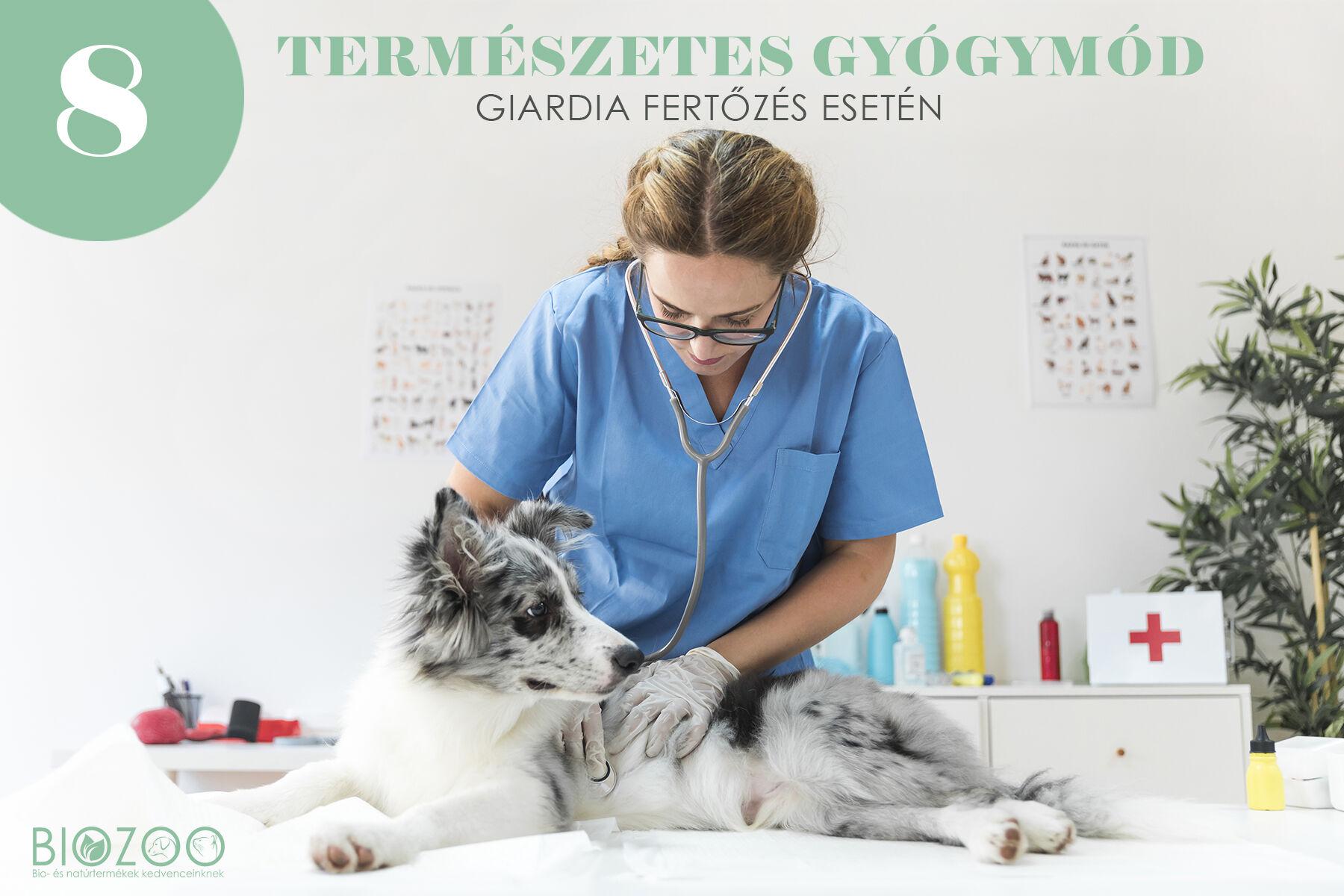 a giardia tünetei és az emberek kezelése)