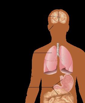 a papilloma vírus nem shqip gyakori helmintás betegségek