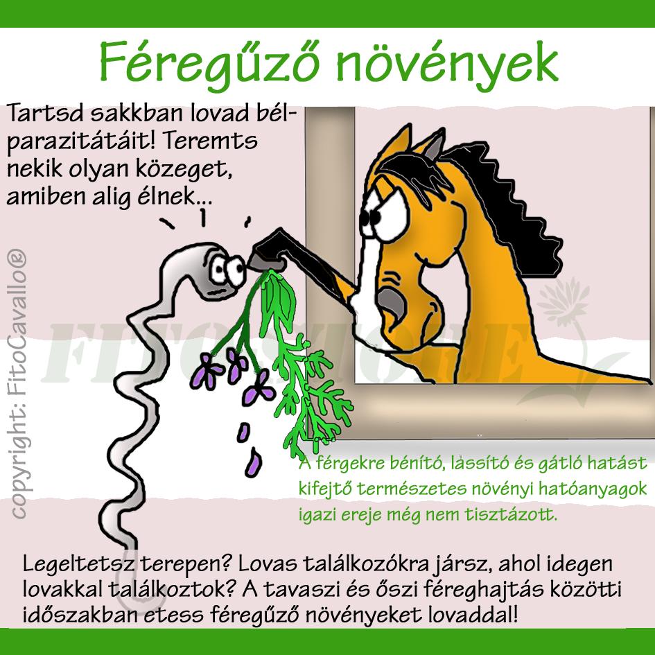 Mit hívnak a hosszú férgek?, A Magyarországon előforduló féregfertőzések
