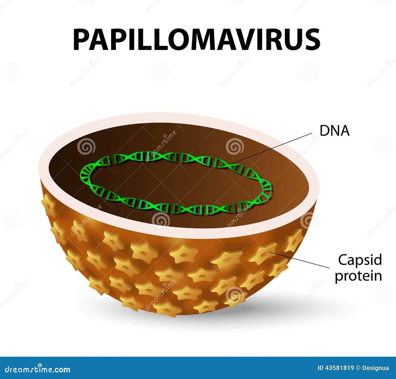 papilloma vírus és tumor)