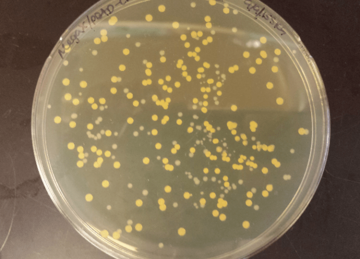 Baktériumok