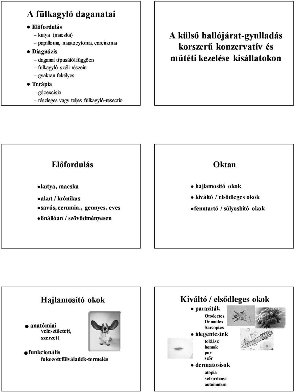 papilloma kapcsolat és paraziták