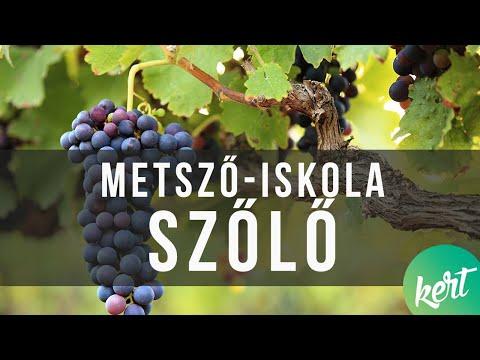Miért eszi féreg a szőlő tövét?
