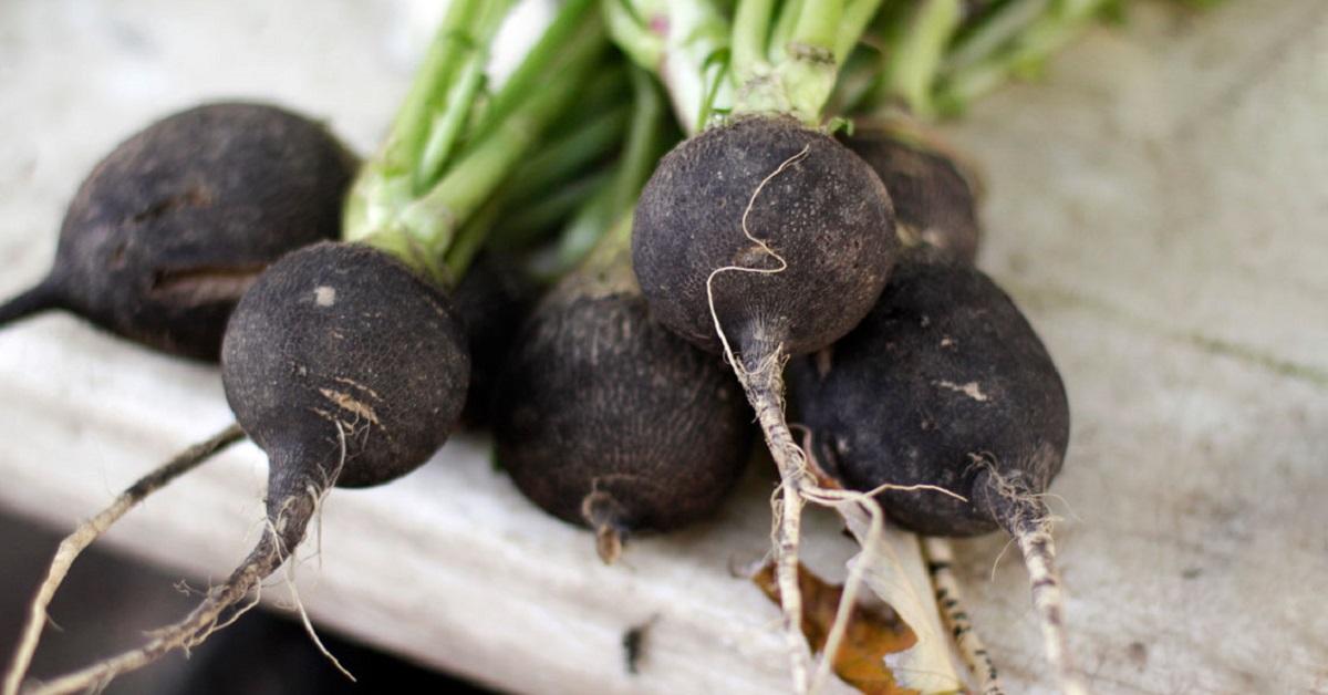 Parazitáktól származó fekete retek. Fekete retek leve - Gyümölcslevek