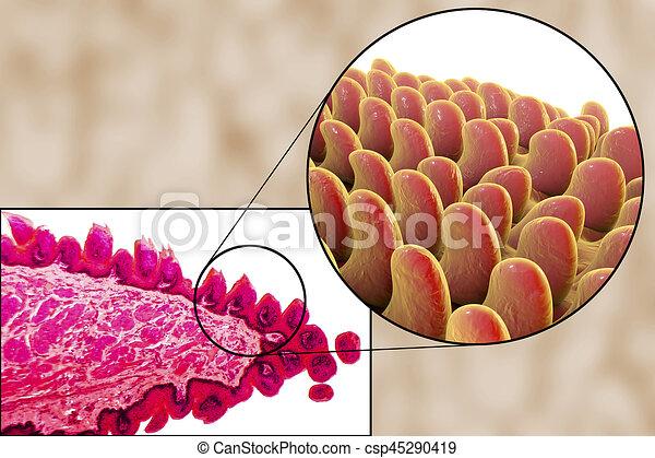 Nemi herpesz, szemölcs és chlamydia: hogyan, milyen tünetekről ismerhetjük fel? - EgészségKalauz