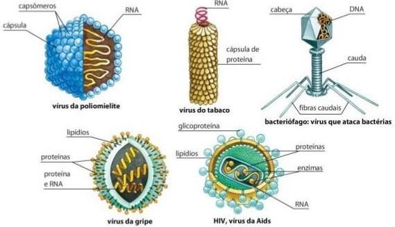 vírusbiológia 5 megrontott