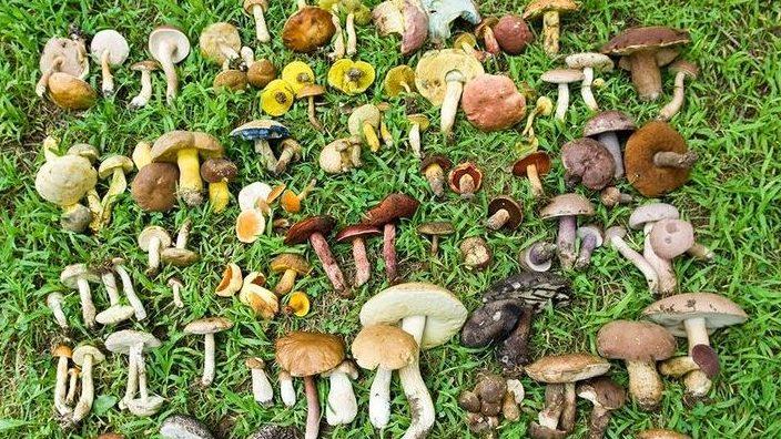 Ehető gombák (HU-La)