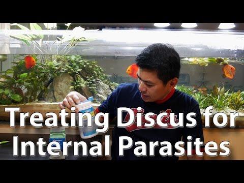 paraziták akváriumokban és skle