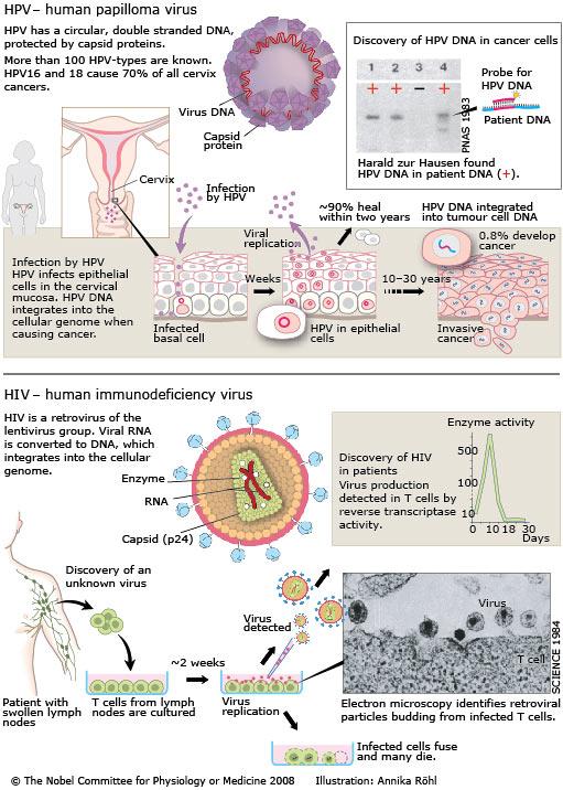 humán papillomavírus retrovírus rák hpv torokrák