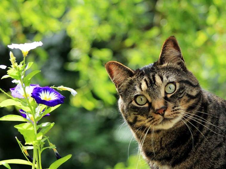 a kertben tartani)
