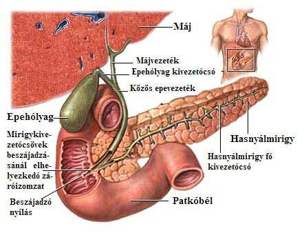 hashártya rák okai)