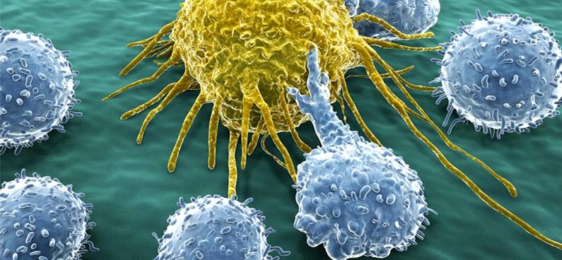 vastagbélrák immunterápia