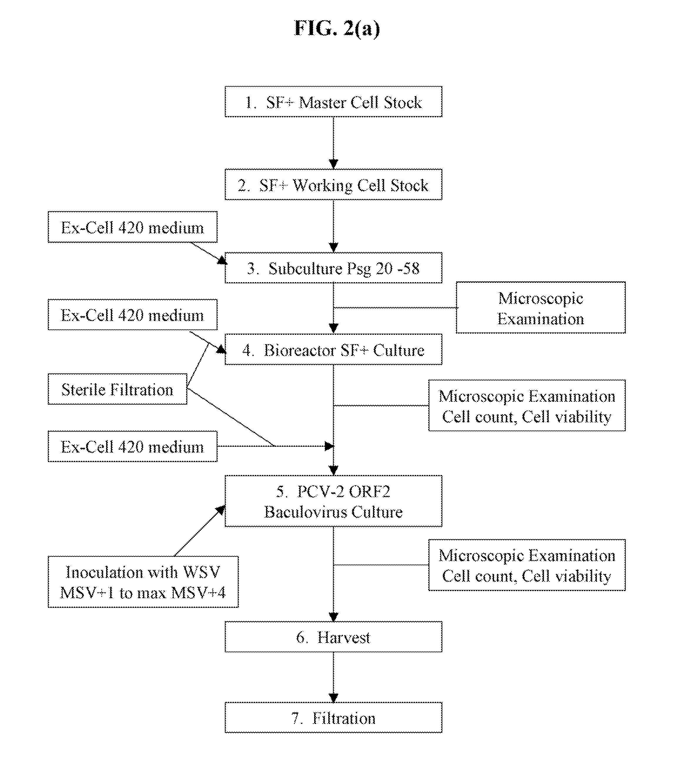 légzési papillomatosis icd 9