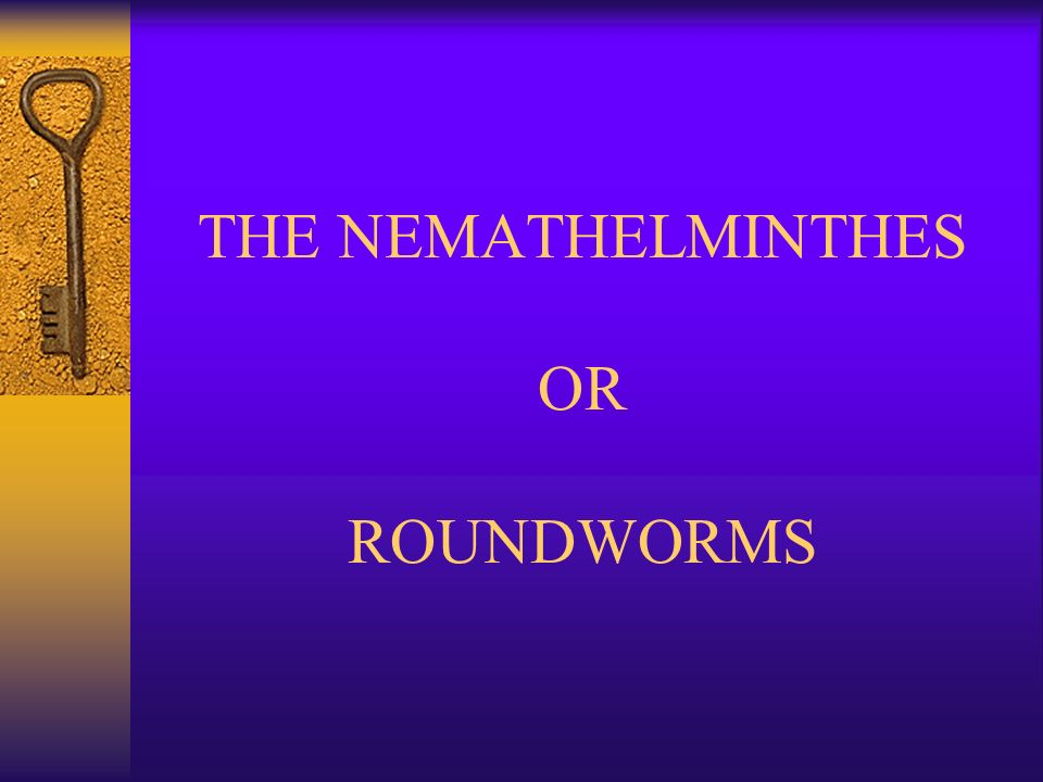 nemathelminthes ppt