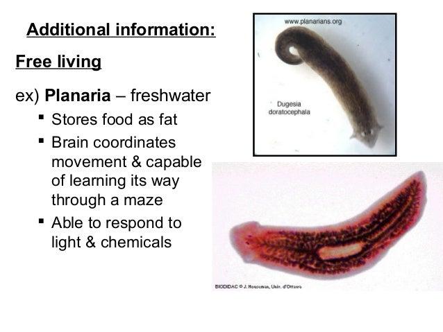 amikor beoltják a papilloma vírust enterobius vermicularis szerkezete