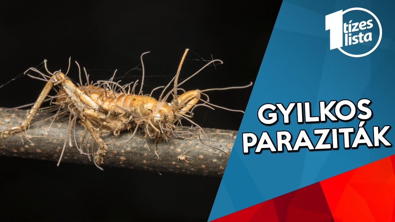 paraziták paraziták)