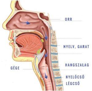A garatgyulladás tünetei, okai és kezelési lehetőségei