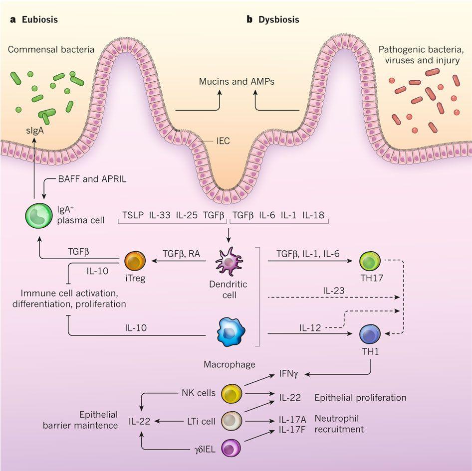 dysbiosis mikrobiológia