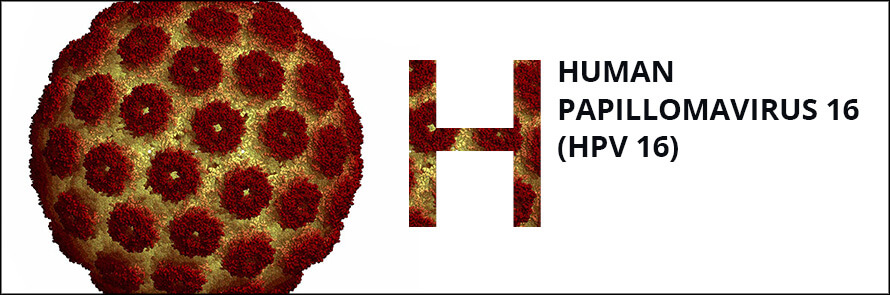 Centrum Lab - Vizsgálat részletei - Humán papillómavírus PCR
