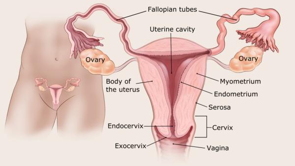 az endometrium bélésének rákja papilloma thanh qu n