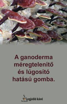 Sun Moon Ganoderma és Cordyceps kapszula - 60db - VitaminNagyker webáruház