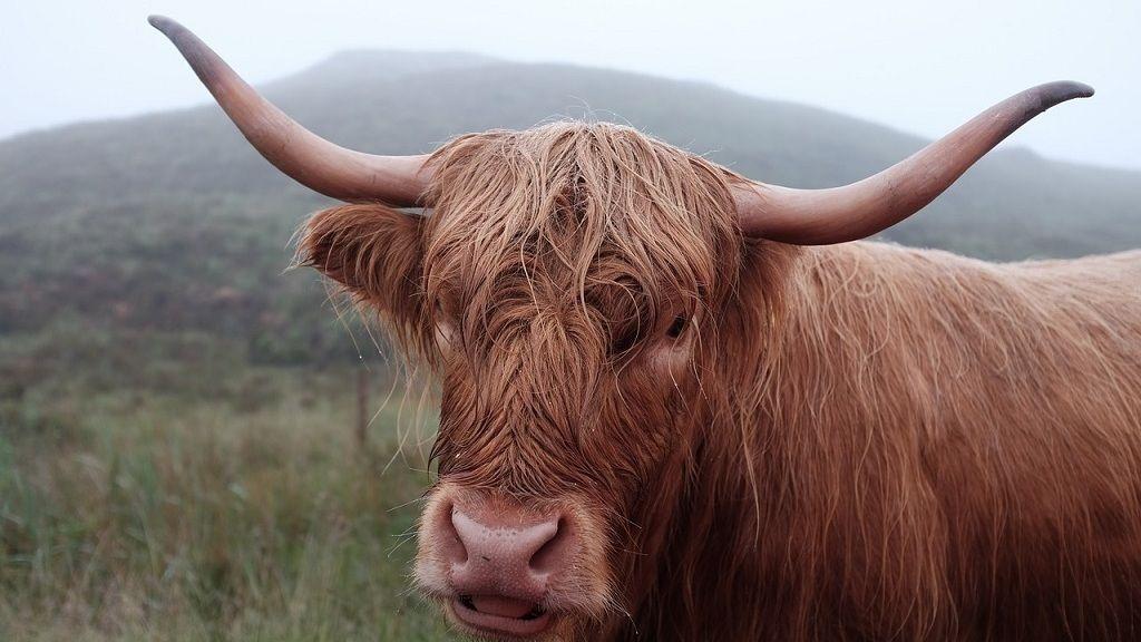 hogyan lehet megtalálni ezt a bikát